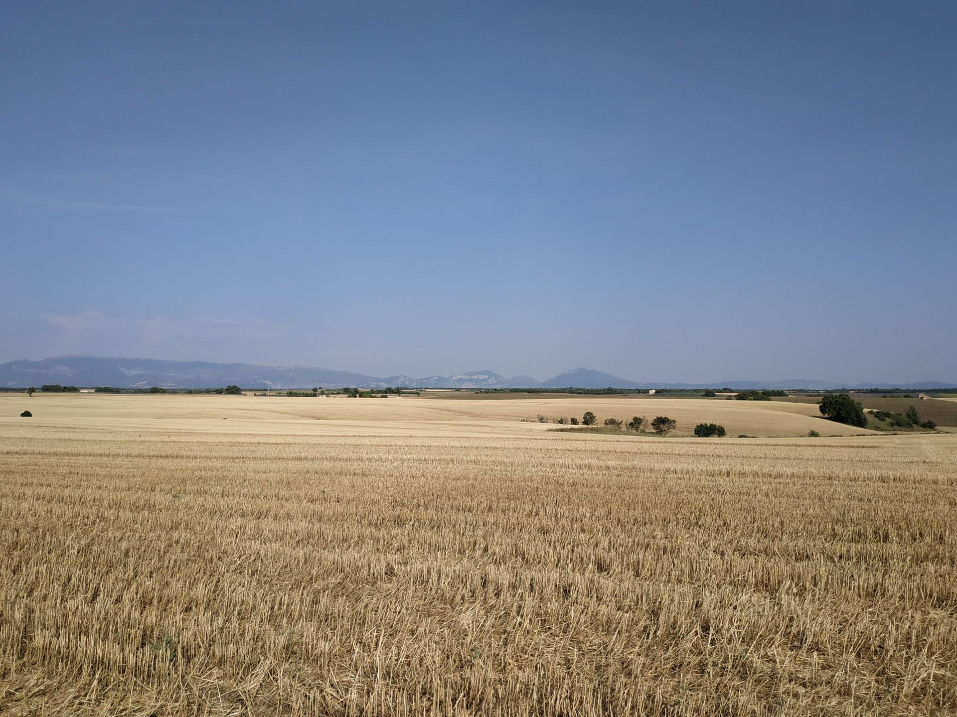 Plateau de Valensole, Juillet